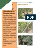 Podridura grisa (Botrytis cinerea)