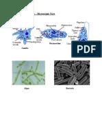 243024664-unicellular-organisms-microscopic-view