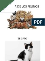 Familia de Los Felinos