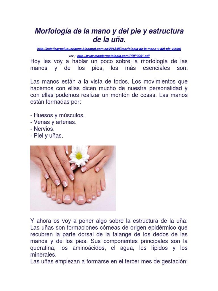 Morfología de La Mano y Del Pie y Estructura de La Uña