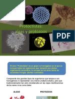 protoctistas.pdf