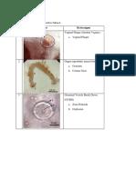Hasil koleksi embrio.pdf