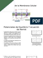 Biofísica de la Membrana Celular.pptx