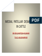 Medial Patellar Desmotomy in Cattle by Santh