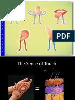The Senses (2)