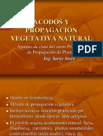 PP.ACODOS.PP.VV.NN.pdf