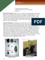 ficus microcarpa.pdf