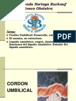 Cordon Umbilical y La