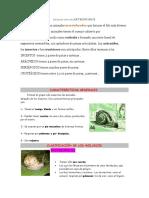 DEFINICIÓN DEARTRÓPODOS.docx
