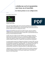 Los Priones y Transmisión Del Impulso Nervioso en El Encéfalo