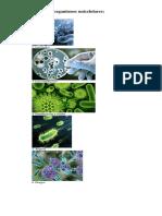 10 Ejemplos de Organismos Unicelulares