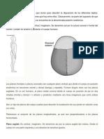 Los Planos Anatómicos Morfofisiologia