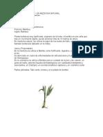 Se Utiliza El Bambú en Medicina Natural