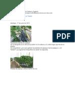 Papaya (Estructura Para Cultivar y Agobio)