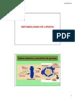 Metabolismo de Los Lipid