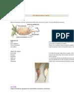 Nociones Básicas de Botánica
