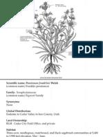 Penstemon franklinii ~ Utah Rare Plants