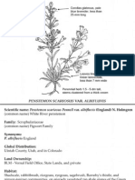 Penstemon scariosus var. albifluvis ~ Utah Rare Plants