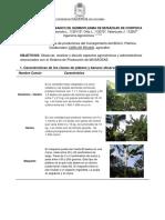 InformeSalidaMusaceasBOLO.pdf