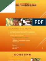 POSCOSECHA Cacao