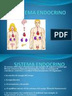 ppt endocrino