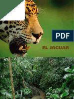 Folleto Jaguar en Mexico