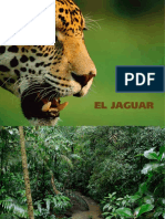 Folleto Jaguar en Mexico