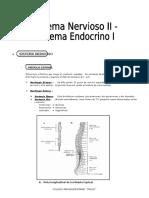 IV BIM -3er. Año - Bio - Guía 6 - Sistema Nervioso II-Endoc