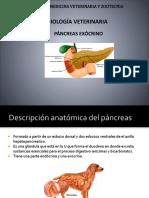 Fisiología Veterinaria Páncreas Exócrino