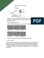 GIARDIASIS Producida Por El Parasito Giardia Lamblia