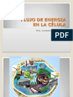 bioenergc3a9tica-2012