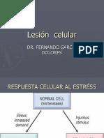 4 Lesincelularfer 120225152321 Phpapp02