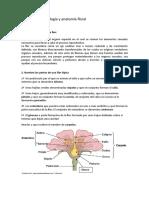 12. morfologia y anatomia.doc