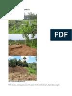 217764237 Metode Pelaksanaan Landscape Docx