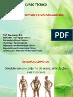 Anatomia - Sistema Ósseo (1)