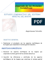Anatomia Comparada Del Sistema Reproductor Del Macho