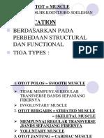 OTOT = MUSCLE POWER POINT