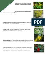 80 PLANTAS MEDICINALES