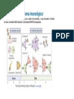 Componentes de Um Sistema Imune