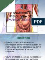 Sistema Digestivo Expo Final