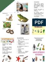 123381918 Triptico Vertebrados e Invertebrados