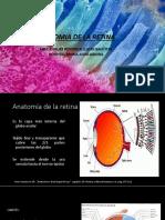 4 Anatomia de Retina