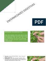 ENFERMEDADES-DIGESTIVAS11