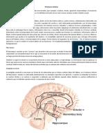 104747592-Neurofisiologia-de-Las-Emociones.pdf