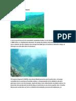 Bosques Nativos de Chinchay