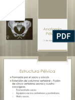 Anatomía Pélvica