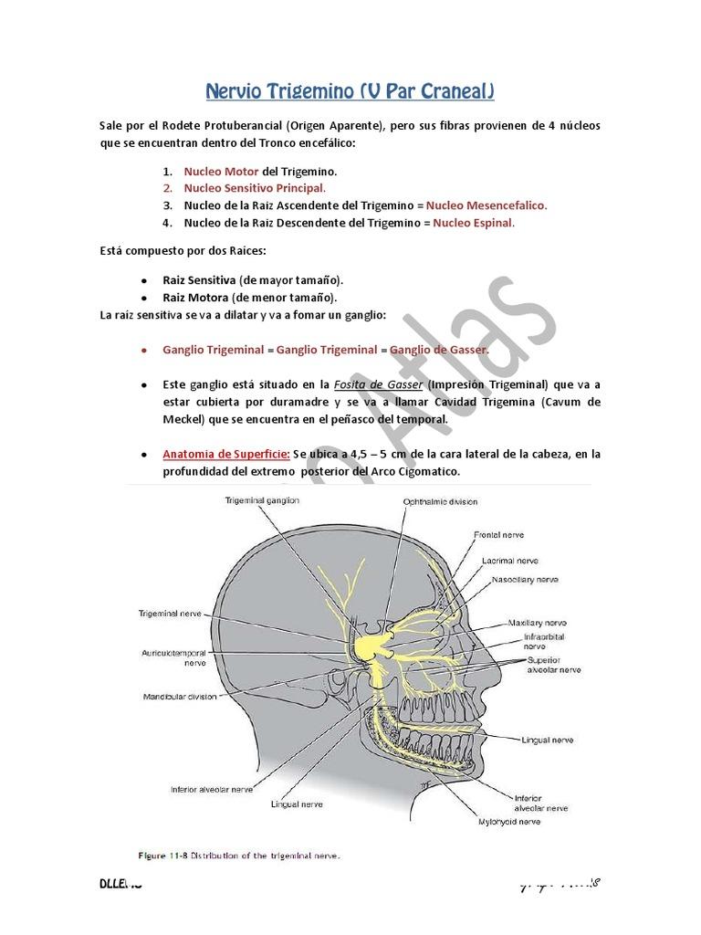 nerviotrigeminoramas-130506010841-phpapp02.pdf