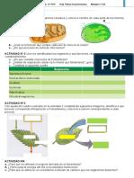 Fotosintesis y Respiración