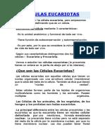 CELULAS EUCARIOTAS JANPOL.docx