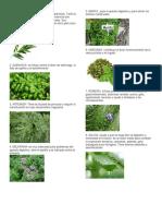 plantas medicnales
